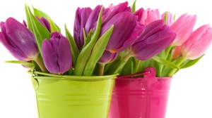 Pink-And-Purple-Tulips-In-Green-And-Pink-Vases-Wallpaper